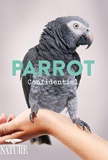 A papagájok titkai online film, filmnézés, ingyen